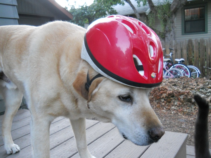 Henry in helmet2
